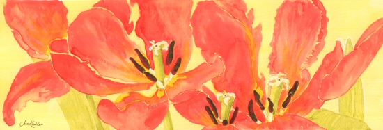 Red tulips, © 2011 Jess Knowles